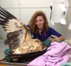 Xray for a sea eagle